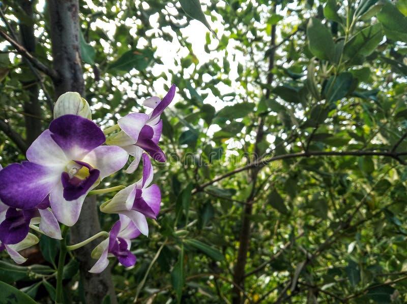 De bloemen van de schoonheid stock foto's