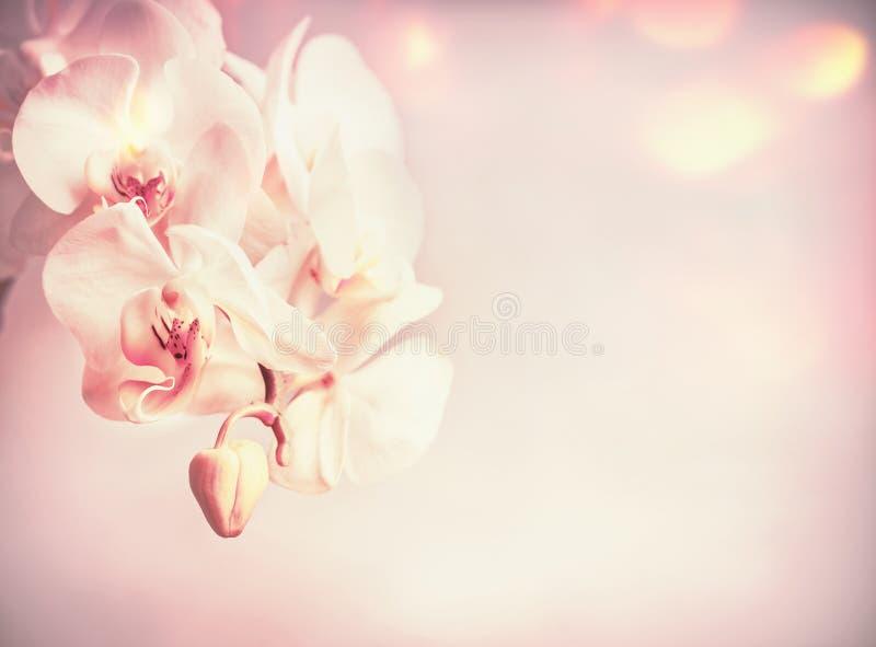 De bloemen van schoonheidsorchideeën bij roze bleke achtergrond royalty-vrije stock afbeeldingen