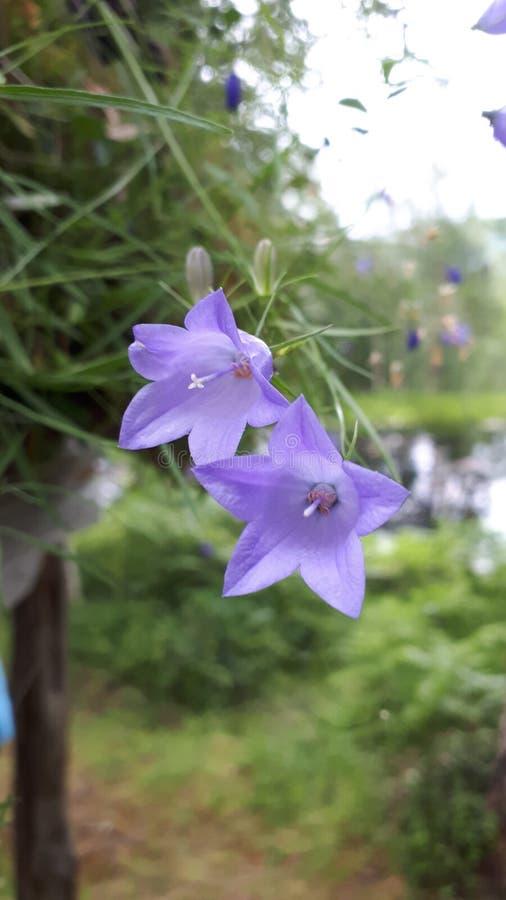 De bloemen van Sommer stock fotografie