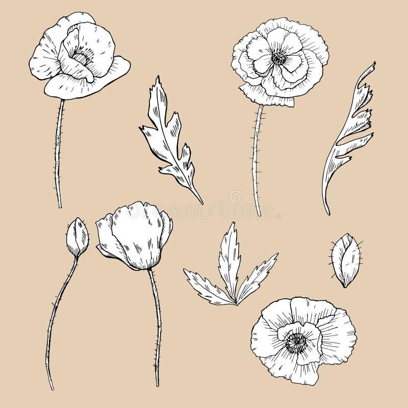 De bloemen van de tekening de klem-kunst van de papaverbloem vector illustratie