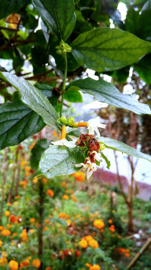 De bloemen van de tuin stock foto