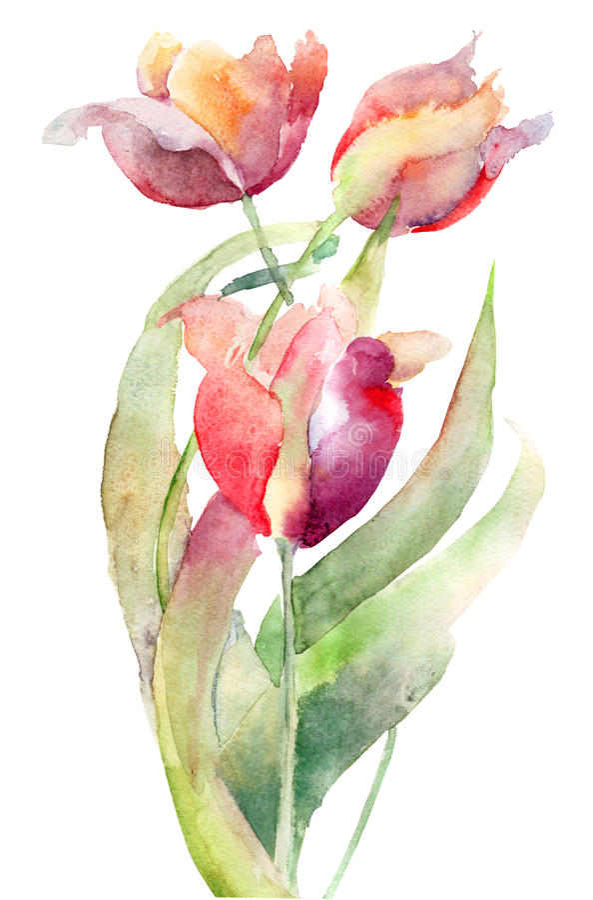 De bloemen van tulpen royalty-vrije illustratie