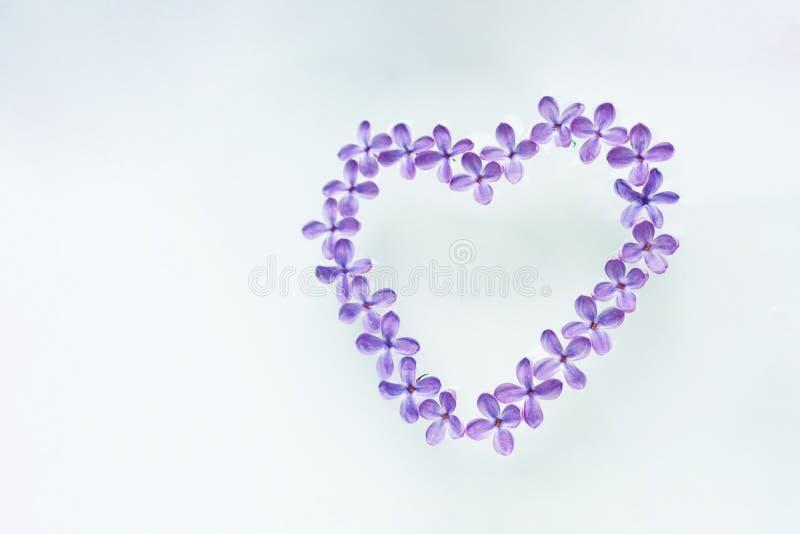 De bloemen van violette sering worden opgemaakt op een witte achtergrond in de vorm van een hart royalty-vrije stock foto's