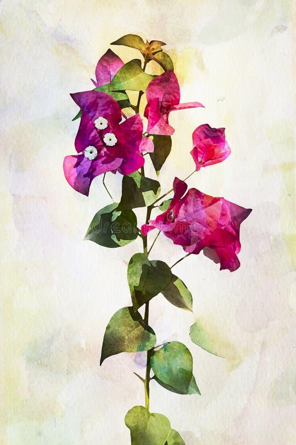 De bloemen van waterverfbougainvillea vector illustratie
