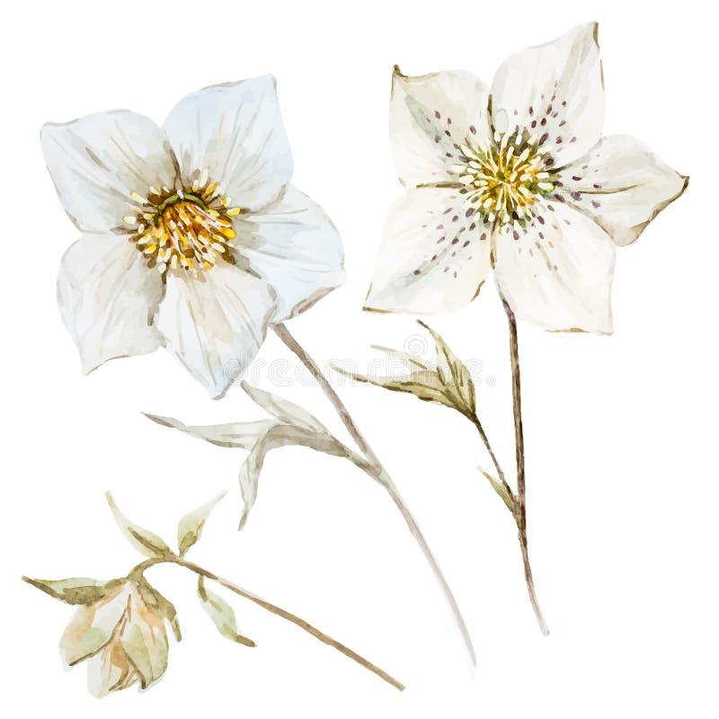 De bloemen van waterverfkerstmis vector illustratie