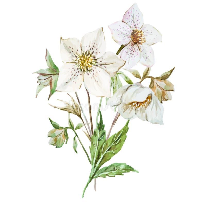 De bloemen van waterverfkerstmis royalty-vrije illustratie