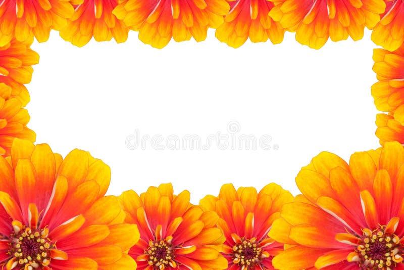 De bloemen van Zinnias stock afbeelding