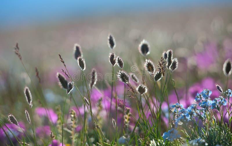 Download De Bloemen Vergeten Me Nota Stock Afbeelding - Afbeelding bestaande uit gardening, spring: 39116371
