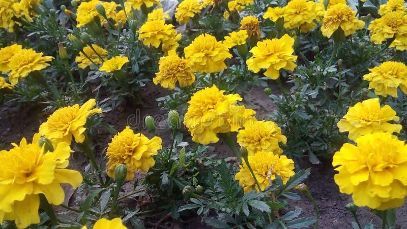 De bloemen zijn in een park royalty-vrije stock afbeelding