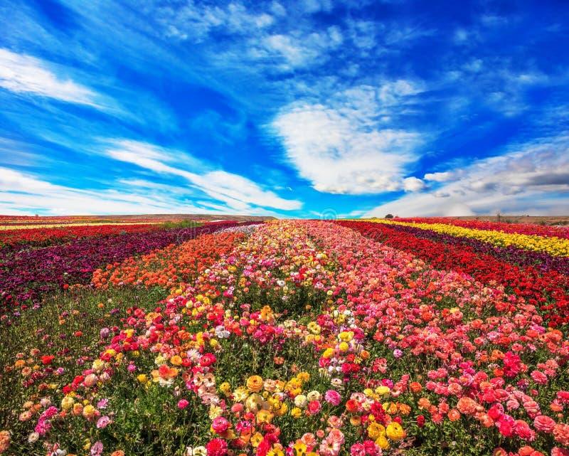 De bloemen zijn helder strepen royalty-vrije stock foto's