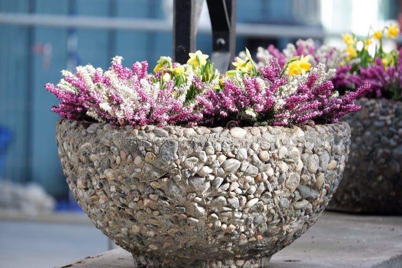 De bloemen zijn de pot royalty-vrije stock afbeelding
