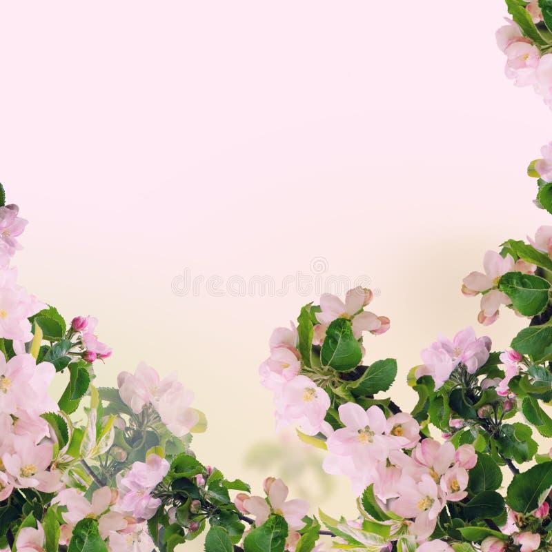 De bloemenachtergrond van Apple stock illustratie