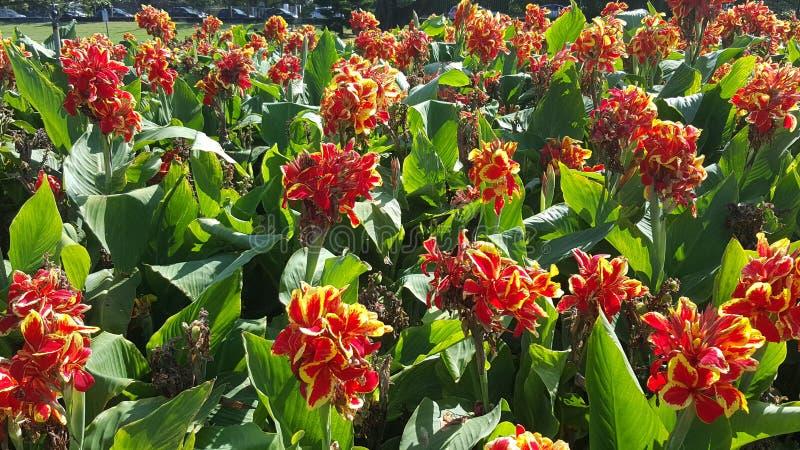 De bloemenachtergrond van de bloem Garden stock foto