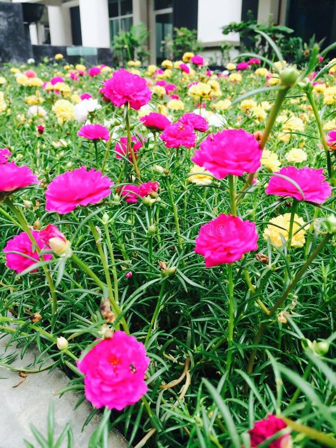 De bloemenachtergrond van de bloem Garden royalty-vrije stock fotografie