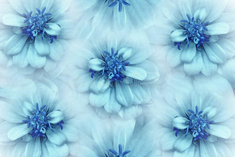 De bloemenachtergrond van het waterverf turkoois-blauw Het close-up van bloemenmadeliefjes op een lichte turkooise achtergrond Bl stock foto