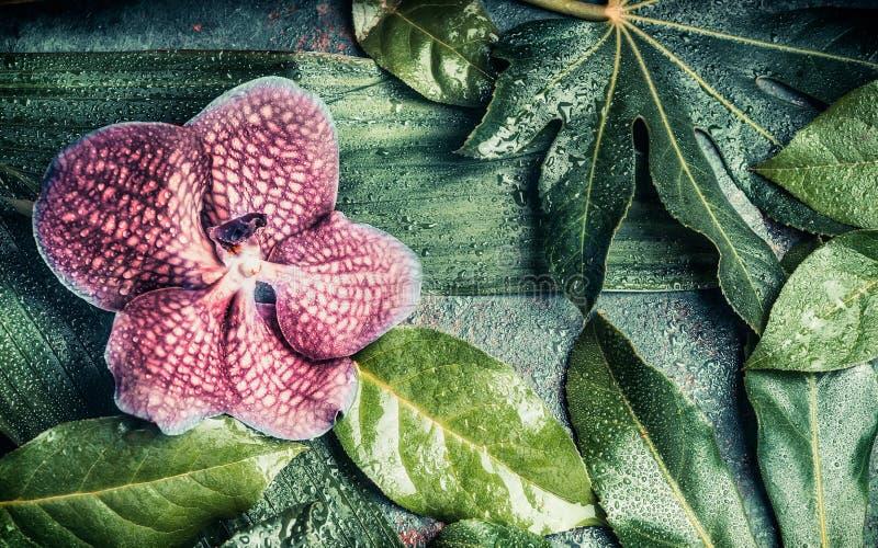 De bloemenbanner met Orchidee bloeit op Creatieve tropische aardachtergrond met diverse palm en wildernisbladeren, hoogste mening royalty-vrije stock afbeeldingen