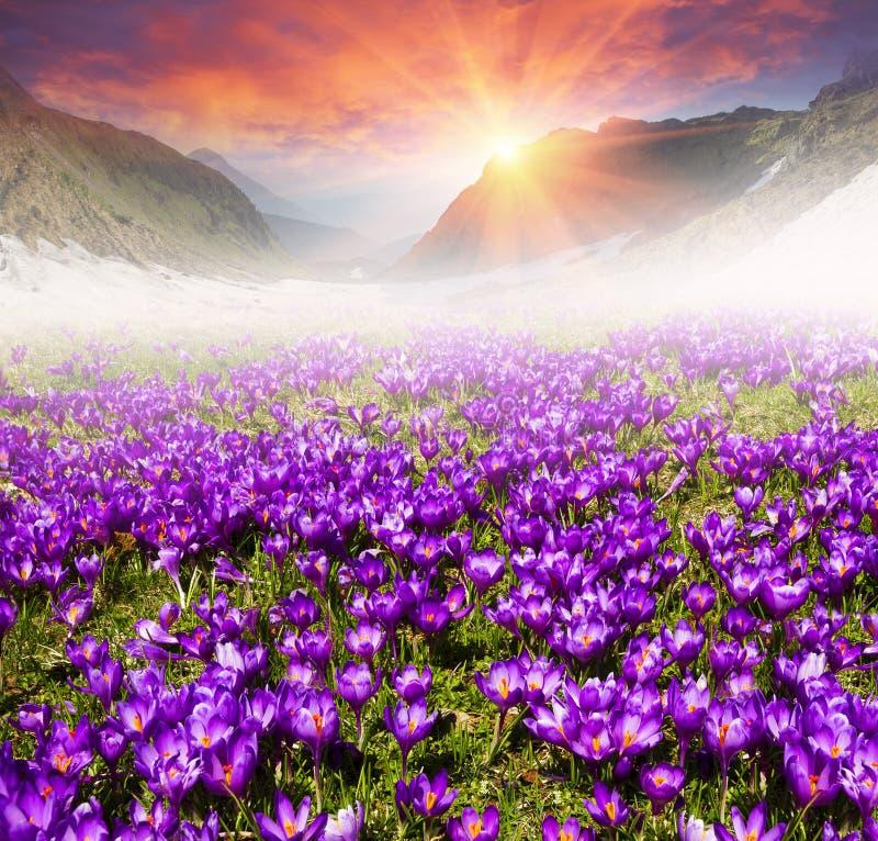 De bloemenberglente stock foto's