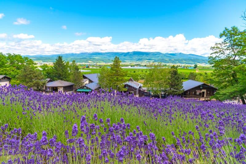 De bloemengebied van de vest violet Lavendel bij de zomer zonnige dag royalty-vrije stock foto's