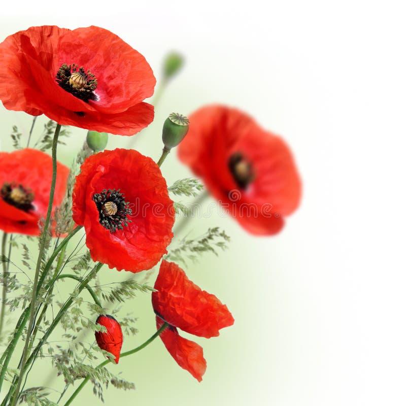 De bloemengrens van papavers stock afbeeldingen