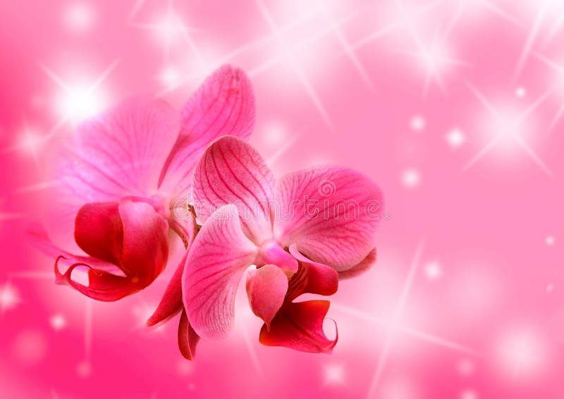 De bloemenkaart van valentijnskaarten royalty-vrije illustratie