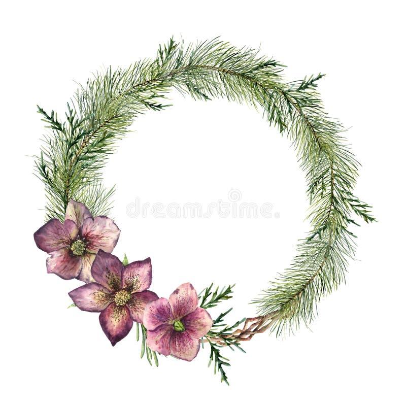 De bloemenkroon van waterverfkerstmis met helleborebloemen Hand geschilderde Kerstboomtak, ceder en hellebore met vector illustratie