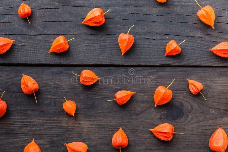 De bloemenphysalis van de de herfstaard, rood fruit voor voedsel stock fotografie