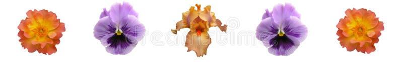 De BloemenStaaf van de Lavendel van het koraal royalty-vrije stock afbeelding