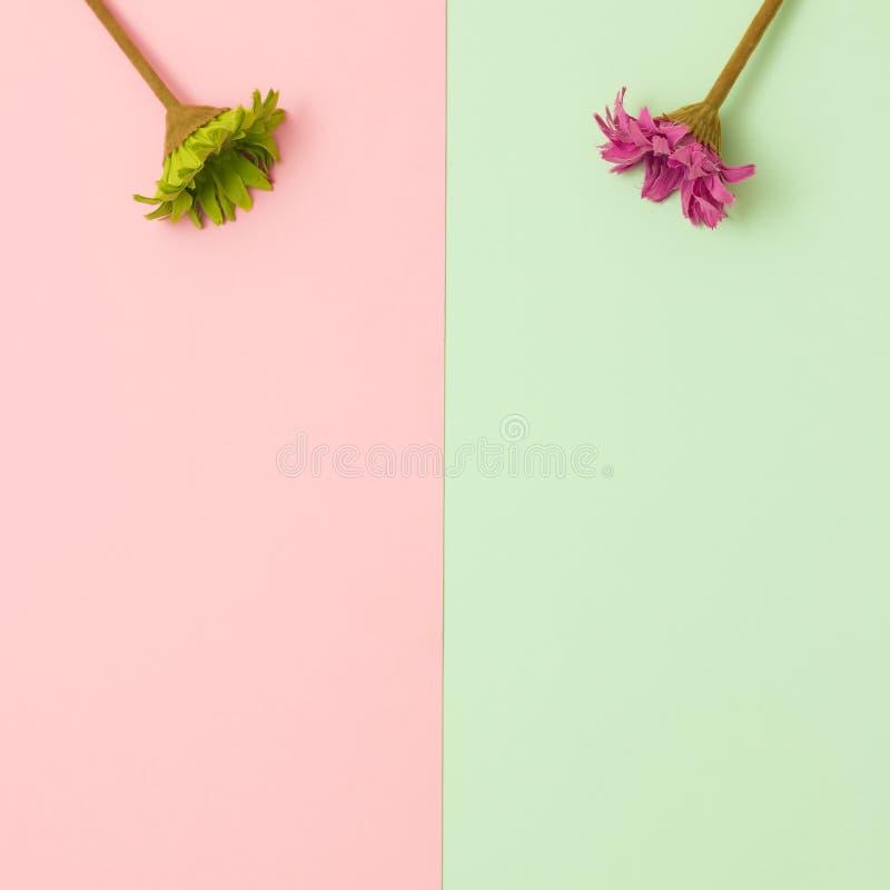 De bloemenvlakte lag royalty-vrije stock fotografie