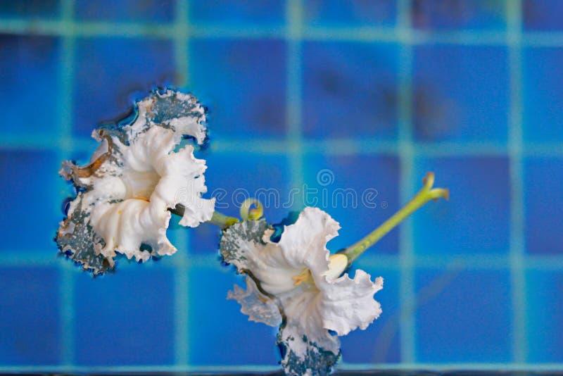 De bloemenvlotter op pool royalty-vrije stock fotografie