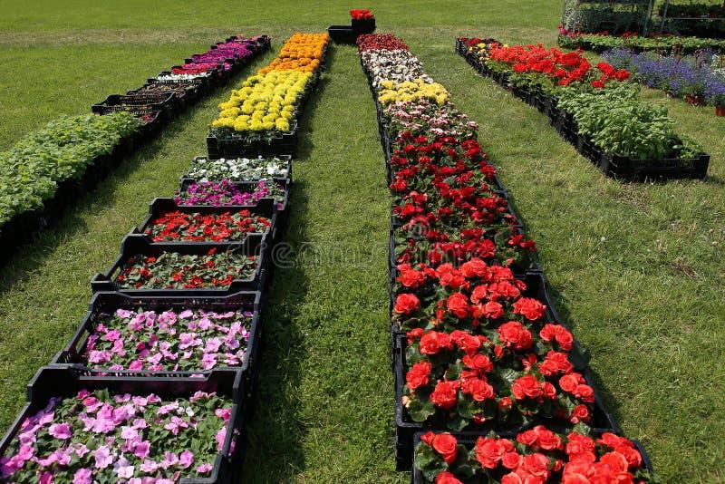 De bloemenzaailingen wordt aangeboden voor verkoop stock fotografie