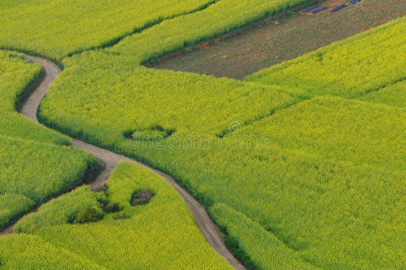 De bloemgebied van de verkrachting van Luoping stock foto's