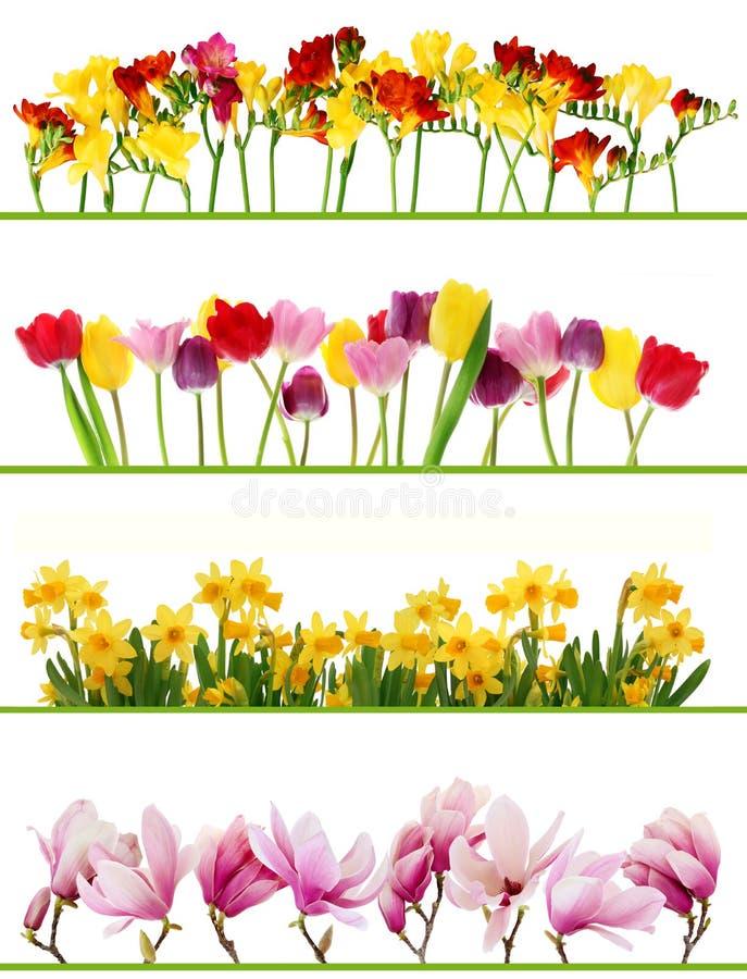 De bloemgrenzen van de lente royalty-vrije stock foto