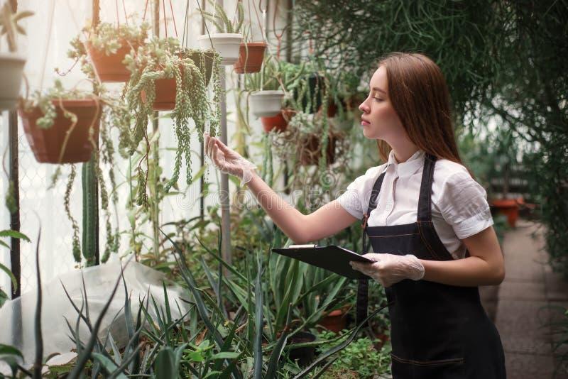 De bloemist behandelt huisbloemen in serre royalty-vrije stock fotografie