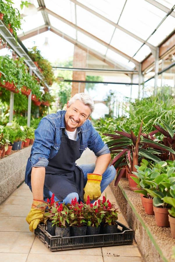 De bloemistwerken in het tuinieren stock fotografie