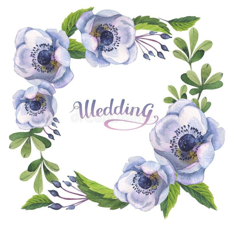 De bloemkader van de Wildfloweranemoon in een geïsoleerde waterverfstijl royalty-vrije illustratie
