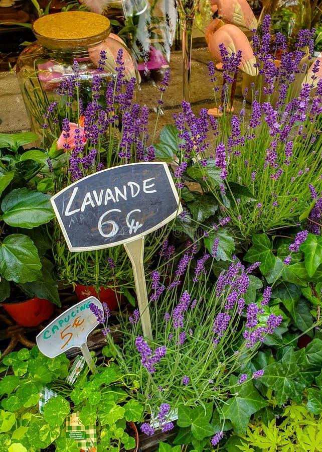 De bloemmarkt in Parijs op Ile DE La Cite, tussen de Notre-Dame-Kathedraal en de kapel die sainte-Chapelle wordt gevestigd stock foto's
