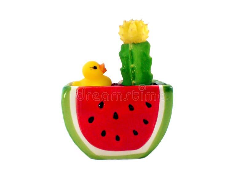 De bloempot van de cactus watermeloenvorm met een geel stock afbeelding