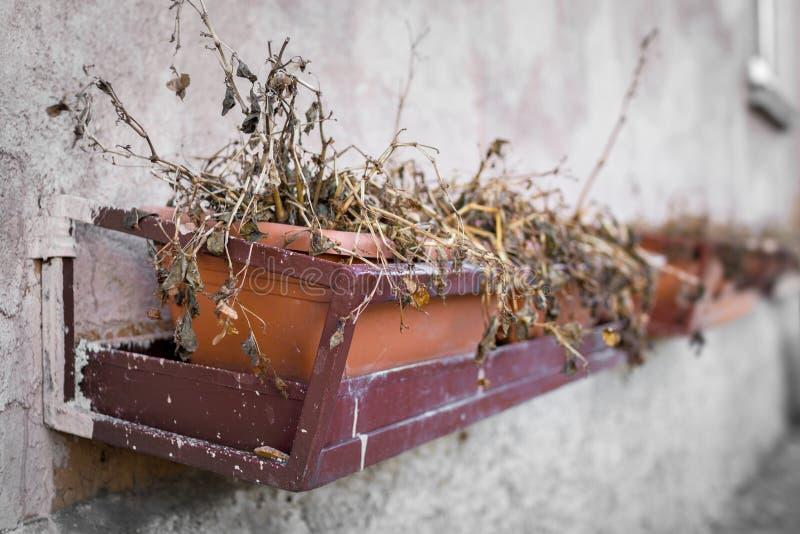 De bloempotten met bloemen stierven stock afbeeldingen