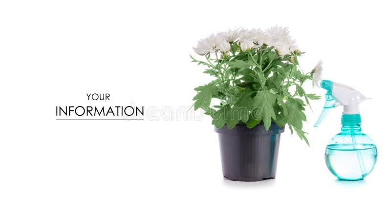 De bloempulverizer van de chrysanteninstallatie patroon royalty-vrije stock afbeelding