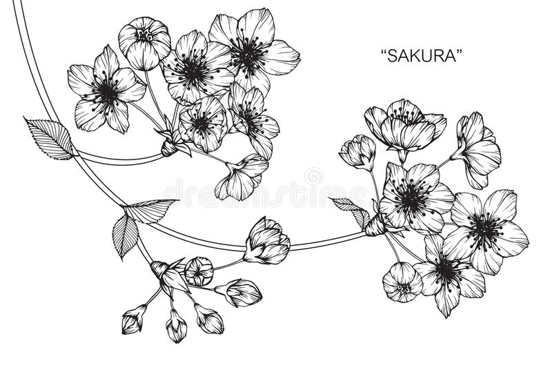 De bloemtekening en schets van de kersenbloesem vector illustratie