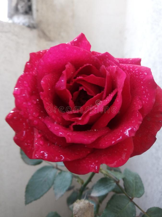 de bloemtuin nam capsicum flowergarden toe royalty-vrije stock afbeelding