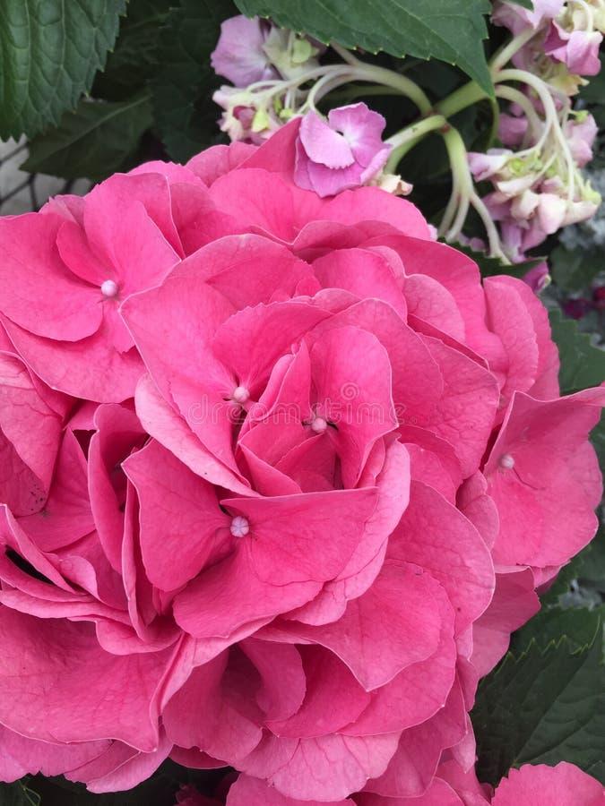 De bloemtuin van de de lentetijd stock afbeelding