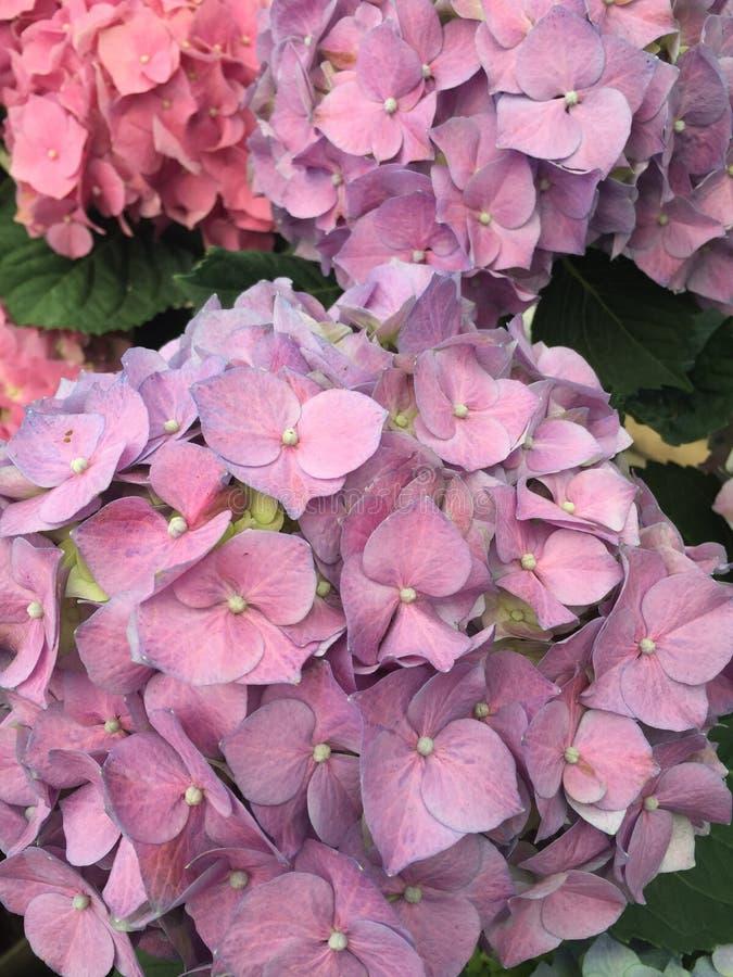 De bloemtuin van de de lentetijd stock afbeeldingen