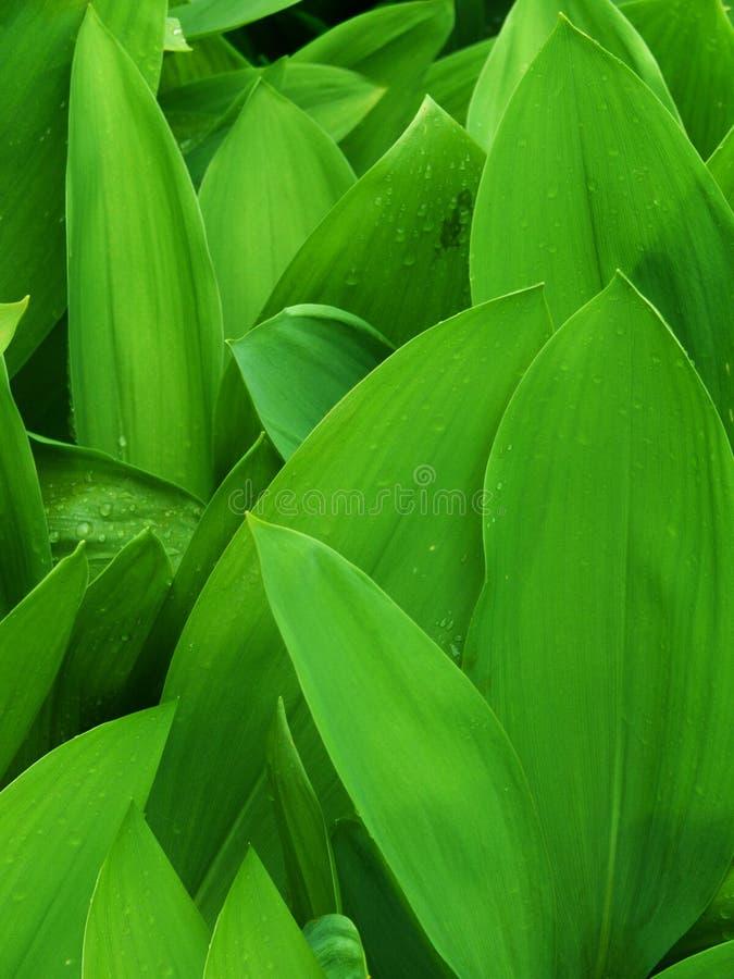 De bloemtulp van bladeren royalty-vrije stock foto
