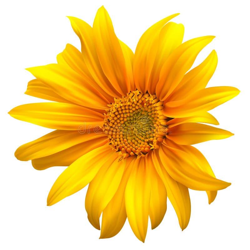 De bloemvector van de zonnebloem stock illustratie