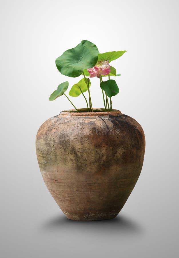 De bloesem roze lotusbloem en het groene blad in een bruine kleipot die op grijze achtergrond voor huisdecor wordt geïsoleerd royalty-vrije stock foto's
