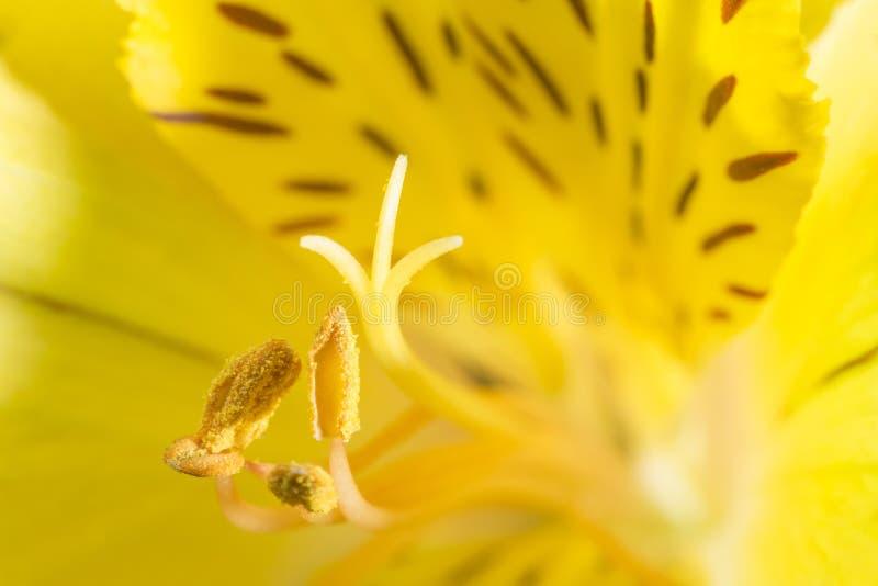 De bloesem van de bloem stock foto's