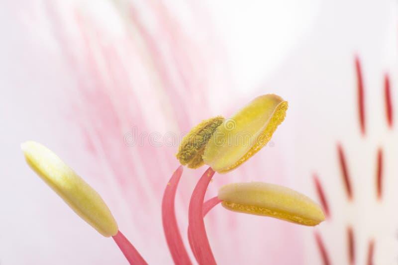 De bloesem van de bloem royalty-vrije stock fotografie