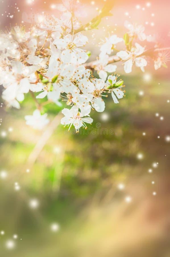 De bloesem van de de lenteboom over vage aardachtergrond stock afbeeldingen