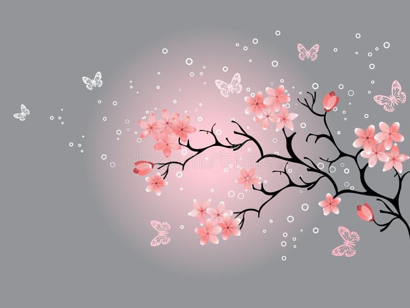 De bloesem van de kers, grijze achtergrond royalty-vrije illustratie